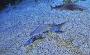 Les bébés requins