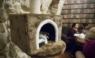 Pour ouvrir, le premier bar à chats de Strasbourg a besoin des internautes (Illustration)