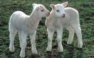 VIDÉO. Hérault: Qui a volé les agneaux et les chevreaux du pic ...