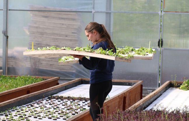 Les jeunes plants sont positionnés sur des radeaux