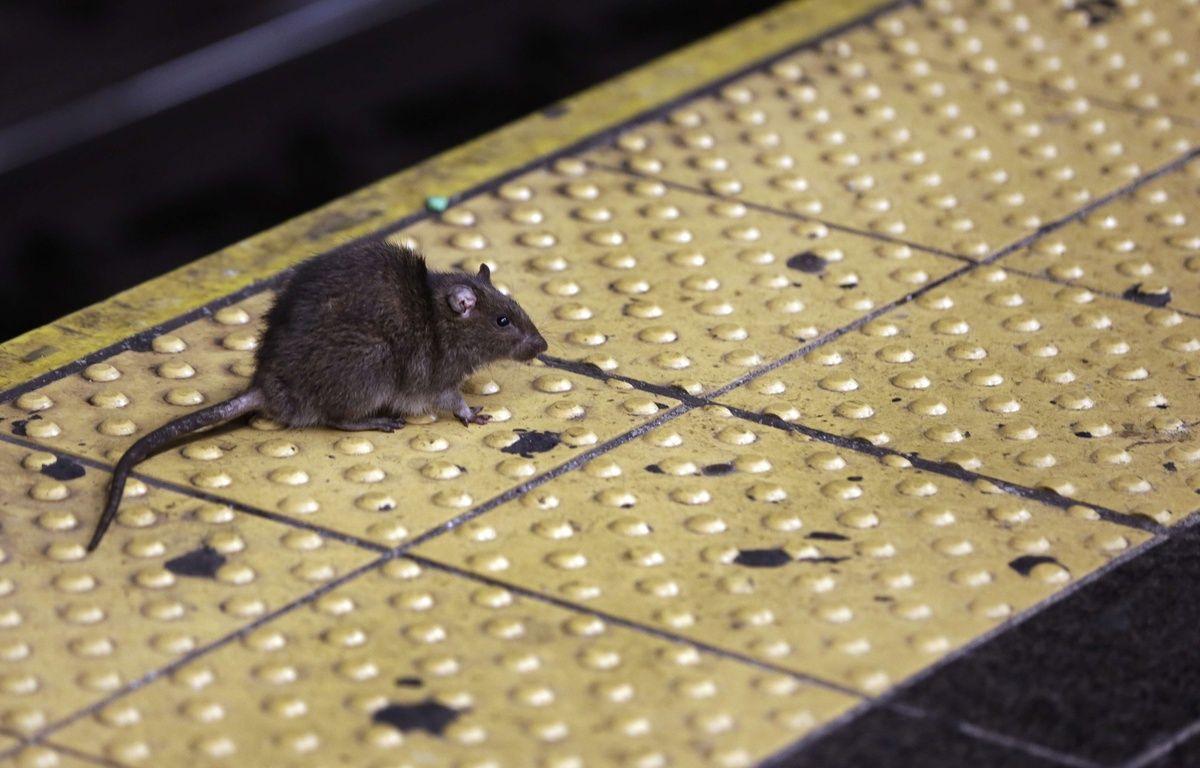 Une femme a trouvé une souris morte dans sa veste Zara – Richard Drew/AP/SIPA