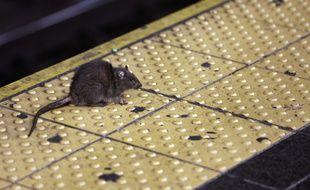 Une femme a trouvé une souris morte dans sa veste Zara