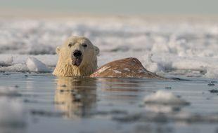 Un ours polaire prend un bain