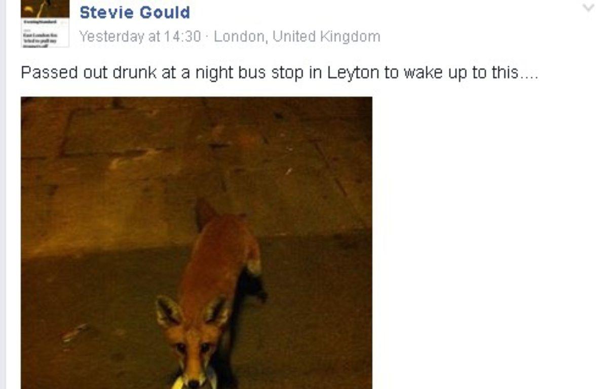 Un Anglais ivre a été réveillé par un renard. – Facebook - Stevie Gould