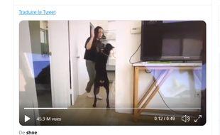Brooke Houts, 20 ans, réalise régulièrement des vidéos auprès de son doberman pour ses 340 000 abonnés.