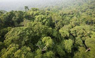 Vue aérienne de la forêt de Jamanxim, au Nord du Brésil, en novembre 2009.