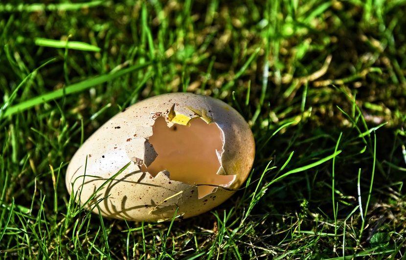 Royaume-Uni : Des archéologues découvrent quatre œufs vieux de 1.700 ans, ils en cassent trois par accident