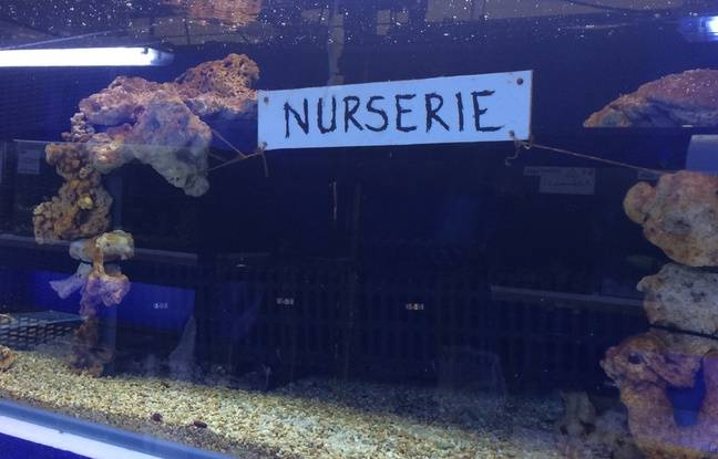 La nurserie du centre Nausicaá, à Boulogne sur Mer