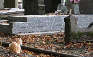 Un chat dans un cimetière (illustration).