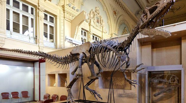 lyon un squelette complet de dinosaure vendu aux ench res. Black Bedroom Furniture Sets. Home Design Ideas