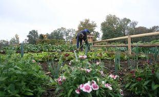 A Tournefeuille, des jardins familiaux.