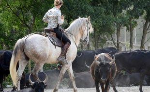 Le taureau de Camargue est manipulé par l'homme à cheval.
