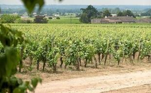 Les viticulteurs craignent une dévalorisation des vignobles AOC.