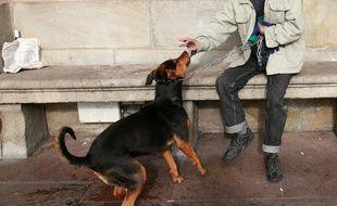 illustration SDF et leur chien