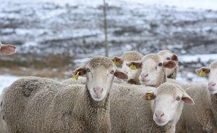 Photo d'illustration d'un troupeau de moutons sous la neige, l'an passé dans la province de Soria (Espagne).
