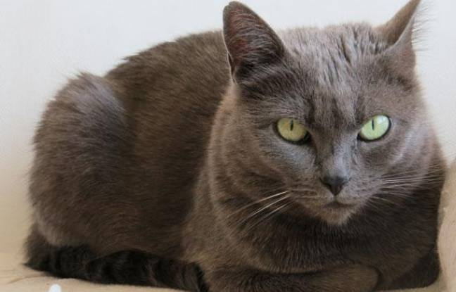 un chat ce n 39 est pas une peluche. Black Bedroom Furniture Sets. Home Design Ideas