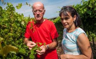 Nathalie Ollat et Louis Bordenave, scientifiques à l'Inra Bordeaux, devant une parcelle atteinte de phylloxéra