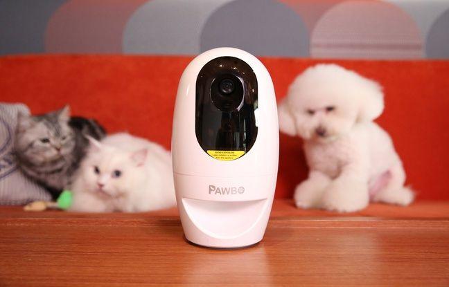 Plus qu'une caméra de surveillance, Pawbo permet aussi de distribuer des friandises à distance à son animal de compagnie.