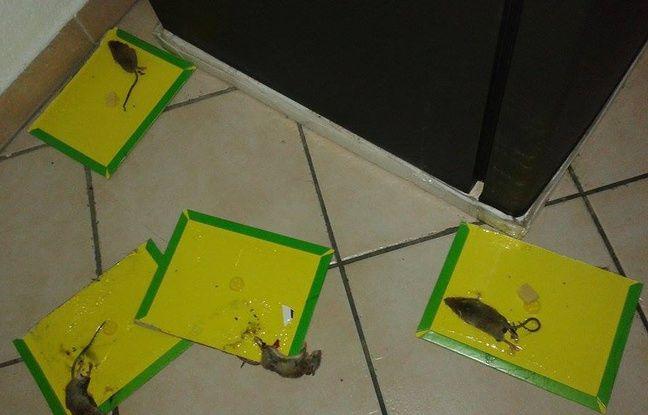 Les souris investissent l'appartement d'Amina et de son fils de 2 ans.