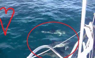 Les dauphins autour du bateau de Romain Attanasio