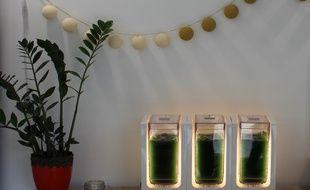 Bloom, le cultivateur de spiruline fraîche de la start-up Alg & You sera mis en pré-vente mi-novembre 2017.