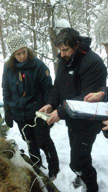 Fabrice Bertile se rend deux fois par an en Scandinavie étudier les ours bruns.