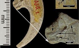 Les serres d'aigle avaient été retrouvées en 1889
