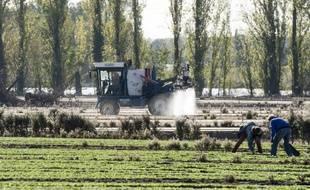 Un champ aspergé de pesticides. (illustration)