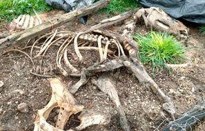 Un cadavre de cheval découvert samedi sur la commune de La Roche-Blanche en Loire-Atlantique.