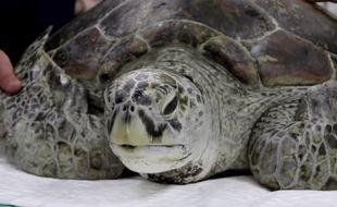 La tortue Tirelire a été opérée pendant 7 heures dans une clinique vétérinaire de Bangkok (Thaïlande) pour retirer les 915 pièces de monnaie dans son estomac.