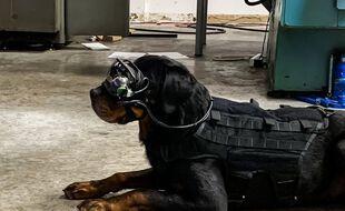 L'armée américaine équipe ses chiens de lunettes de réalité augmentée