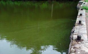 Les cyanobactéries ici en Dordogne (illustration).