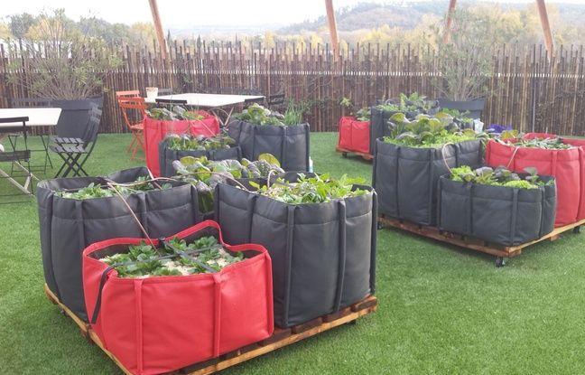 Des exemples d'agriculture urbaine réalisés par Ma Ville Verte.