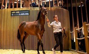 Le prix le plus élevé a été atteint dimanche avec une fille de l'étalon vedette Dubawi et de Prudenzia vendue 1,625 million d'euros à l'écurie Godolphin.
