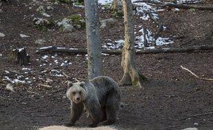 Un ours brun comme ceux des Pyrénées. Illustration.