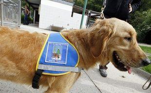 Illustration d'un chien guide pour aveugle.