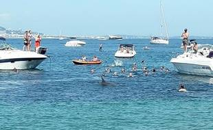 Le dauphin est resté de longues minutes entre les baigneurs