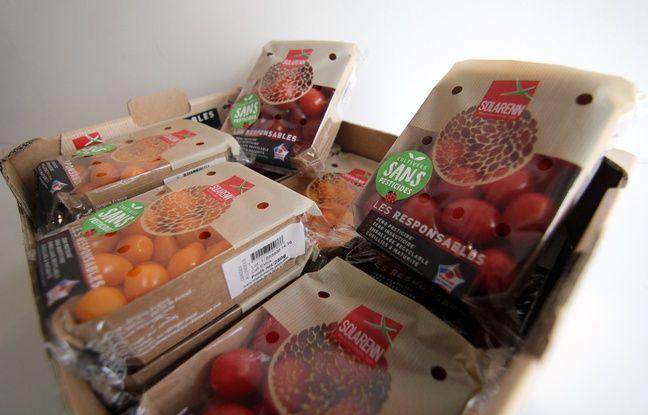 Des barquettes de tomates de la marque Solarenn présentées comme cultivées sans pesticides.
