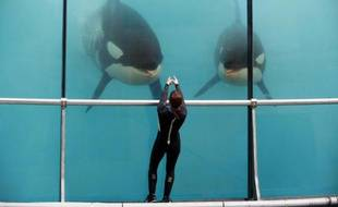 Une employée entraîne des orques au Marineland d'Antibes, le 17 mars 2016