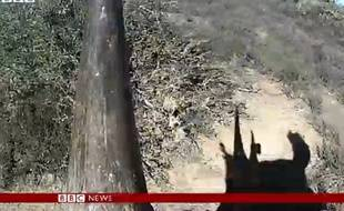 Capture d'écran d'une vidéo de la BBC mise en ligne le 20 juillet 2015.