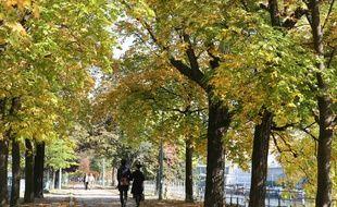 La mairie de Paris lance une étude pendant trois ans, qui consistera à identifier les espèces d'arbres les plus robustes face à la sécheresse et aux fortes chaleurs, en lien avec le réchauffement climatique.