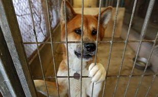 Un chien recueilli dans un refuge de la Ligue protectrice des animaux, à Roubaix.