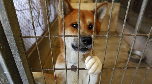 Protection animale  Didier Guillaume veut une loi pour lutter contre les abandons d'animaux, mais elle existe déjà