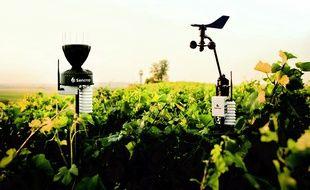 Les stations météo Sencrop permettent aux viticulteurs de réduire les doses de produits phytosanitaires dans le traitement de la vigne.