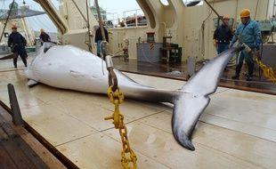 Une baleine pêchée dans l'océan Antarctique, sur une photo publiée le 18 novembre 2014.