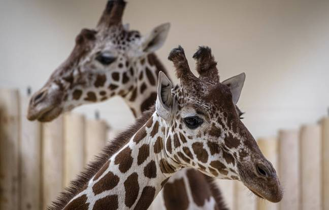Morbihan: Succès de la collecte pour acheter un zoo et libérer les animaux