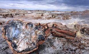 L'arbre découvert au Pérou est vieux de 10 millions d'années (photo d'illustration).