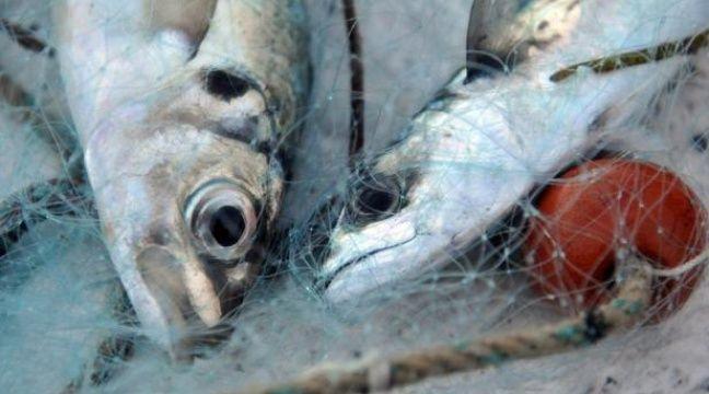 Plus de 200 ONG demandent à l'Europe de soutenir une pêche durable
