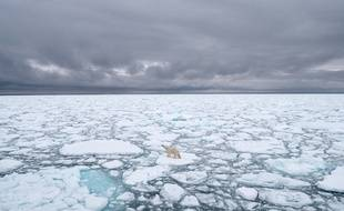 Illustration: Un ours polaire dans le Svalbard, en Norvège, en 2018.