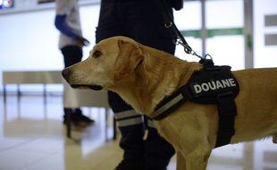 Un chien de la douane française, dans un aéroport. Illustration.